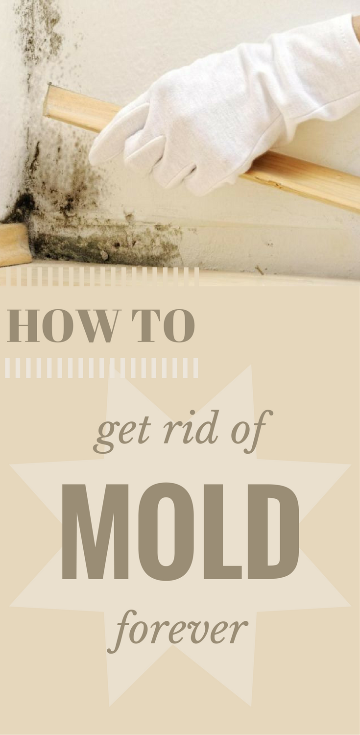 How To Get Rid Of Mold Without Chemicals Forever