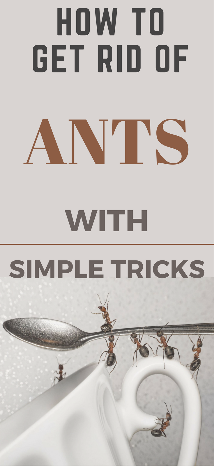 How To Get Rid Of Ants In The Kitchen With Simple Tricks    TopCleaningTips.com