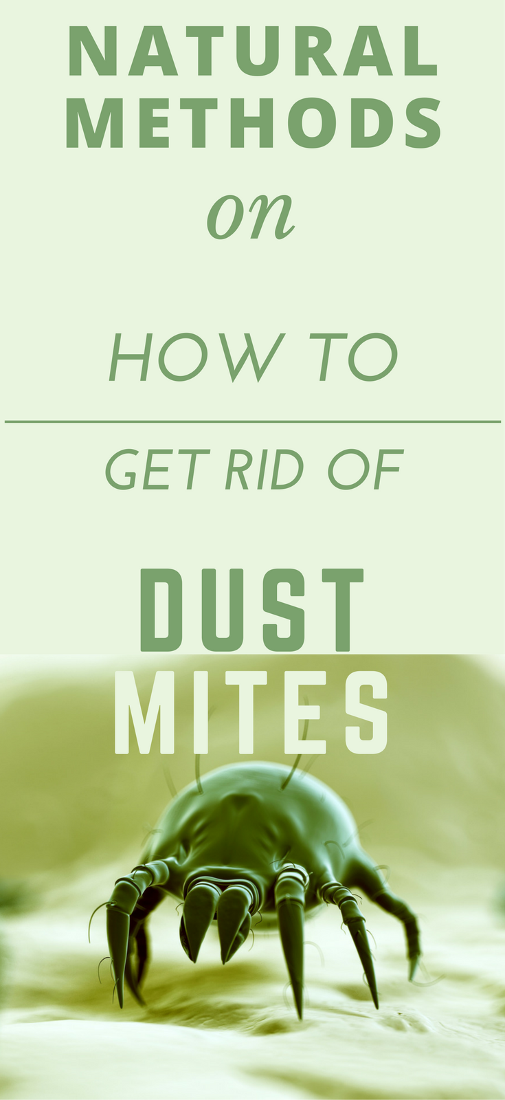 Natural Methods On How To Get Rid Of Dust Mites