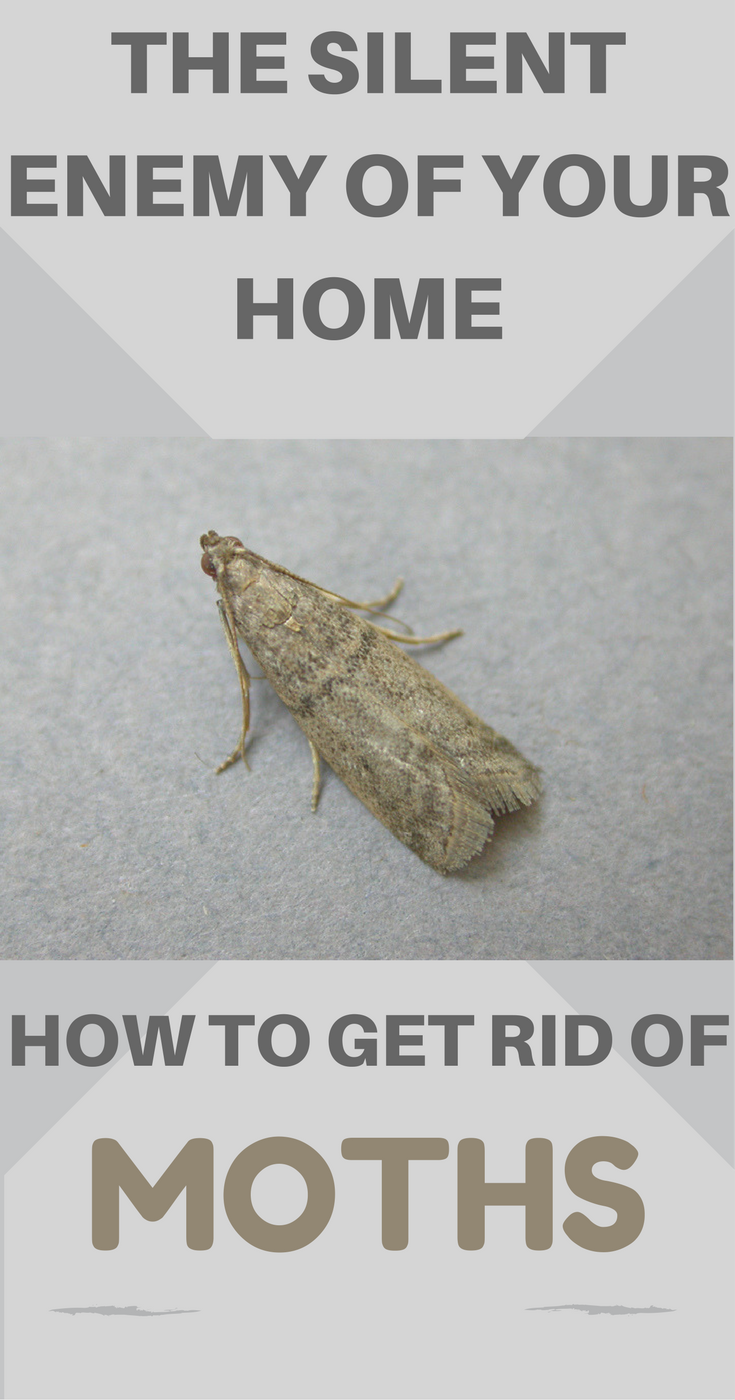 How to get rid of the moth in the apartment - folk and purchase means 12