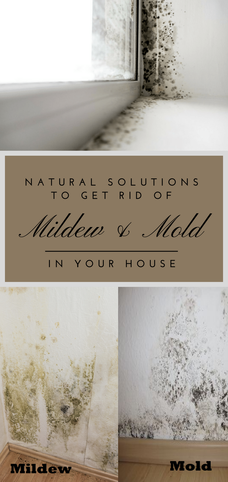 Natural Solutions To Get Rid Of Mildew Amp Mold In Your
